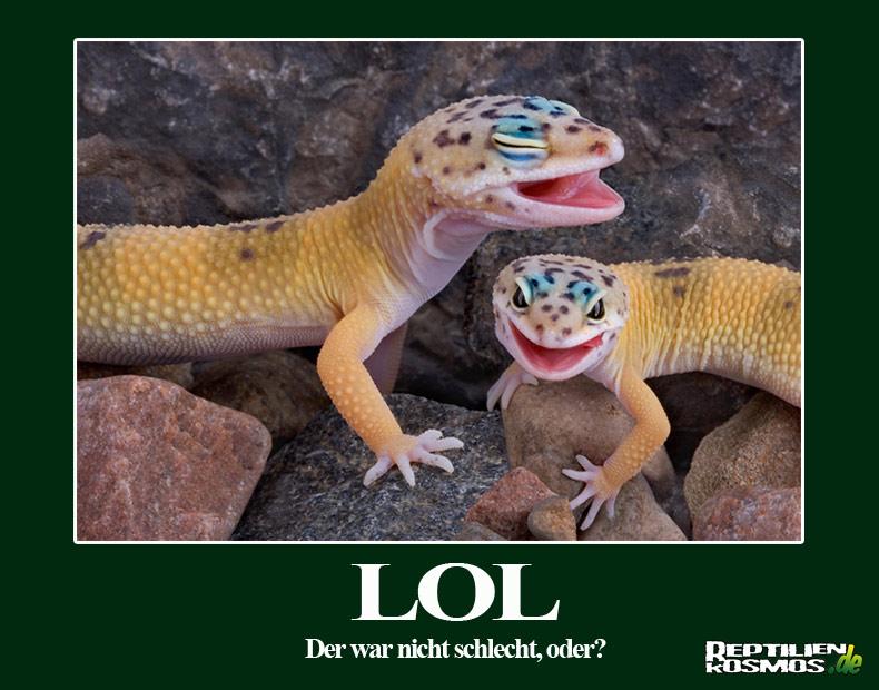 Geckos bester Laune