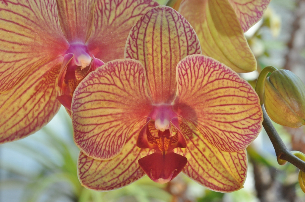 Farbenfrohe Orchideen